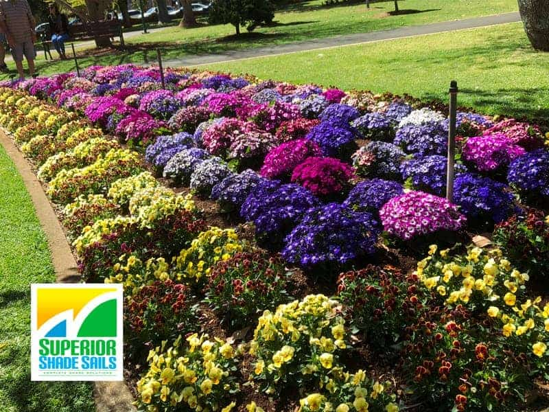 Carnival of Flowers, Toowoomba-Verbenas- Image: Superior Shade Sails