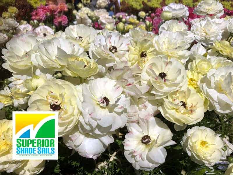 Carnival of Flowers, Toowoomba, Image: Superior Shade Sails