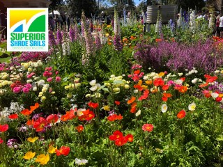 Carnival of Flowers, Toowoomba, Spring Flowers - Image: Superior Shade Sails